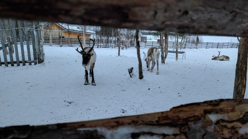 farma irvasa u Jukkasjarviju Foto Trip Blog Post