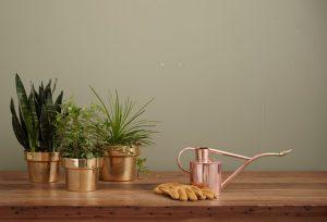 biljke za naš dom