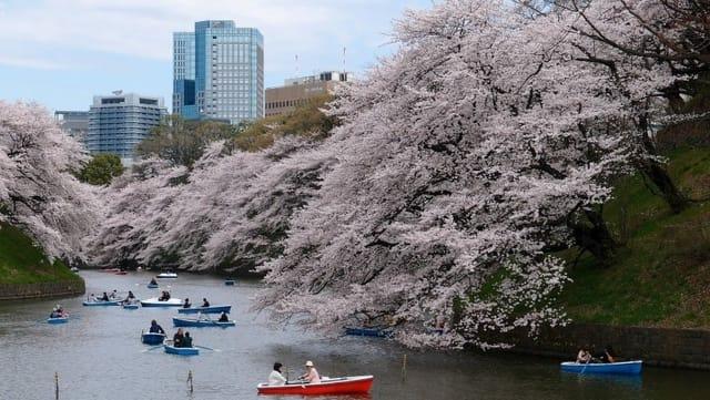 Cvetanje trešanja, Tokijo Foto Trip Blog Post