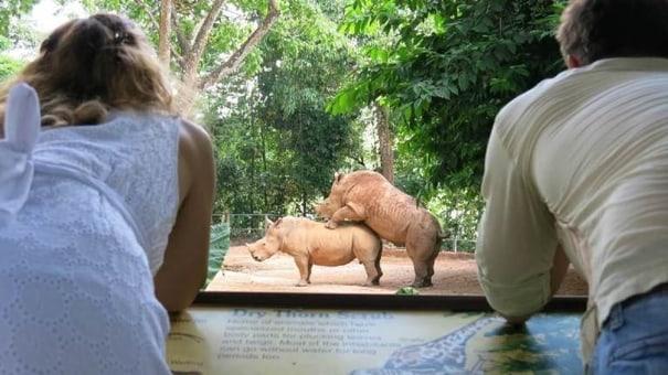 Zoologija u Singapuru. Fuzija zabavnog i nacionalnog parka