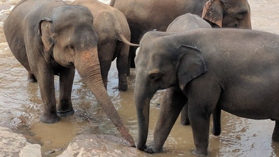 4-slonovi-šri-lanka-Foto-Trip-Blog-Post