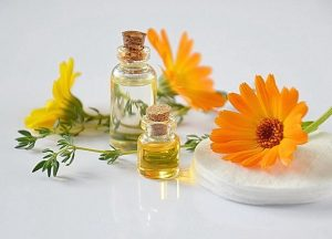 neven biljka etericno ulje foto pixabay