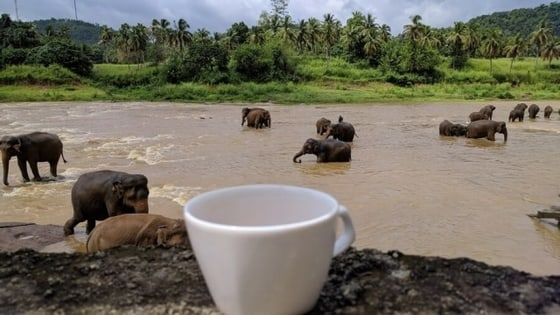 slonovi-šri-lanka-Foto-Trip-Blog-Post